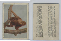 V67 Neilson's Chocolate, Wild Animals, 1930's, #C18 Orang-Utan