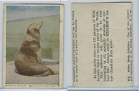 V67 Neilson's Chocolate, Wild Animals, 1930's, #B4 California Sea-Lion