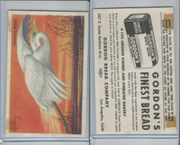 D39-11 Gordon Bread, Bird Pictures, 1950, American Egret