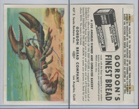 D39-13 Gordons Bread, Denizens Of Deep, 1950's, American Lobster