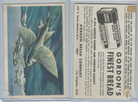 D39-13 Gordons Bread, Denizens Of Deep, 1950's, Flying Fish