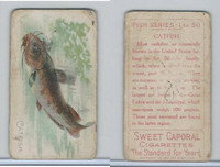 T58 American Tobacco, Fish, 1910, Catfish