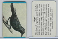 F279-3 Quaker, Pack-O-Ten Bird Cards, 1957, Crow