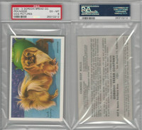 D39-3, Gordon Bread, Recipe - Dogs, 1940's, Pekingese, PSA 6 EXMT
