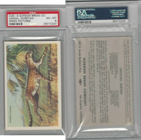 D39-8, Gordon Bread, Speed Pictures, 1941, Animal Cheetah, PSA 6 EXMT