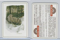 C18-0 Carreras, Wild Animals, 1985, Canadian Lynx