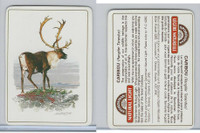 C18-0 Carreras, Wild Animals, 1985, Caribou