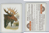 C18-0 Carreras, Wild Animals, 1985, Moose