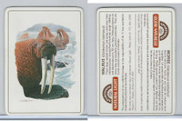C18-0 Carreras, Wild Animals, 1985, Walrus