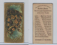N216 Kinney Cigarettes, Animals, 1890, Boa Constrictor