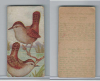 V75 Patterson Candy, Bird Cards, 1924, Marsh Wren