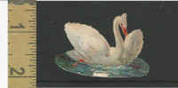 Victorian Diecuts, 1890's, Animals, Swan (16)