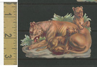 Victorian Diecuts, 1890's, Animals, Lion & Cubs (26)