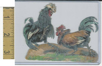 Victorian Diecuts, 1890's, Birds, Chickens, Cock Fight (83)