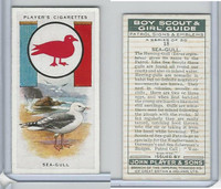 P72-68 Player, Boy Scout & Girl Guide, 1933, #18 Sea-Gull Bird