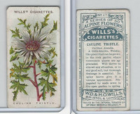 W62-62 Wills, Alpine Flowers, 1913, #47 Cauline Thistle