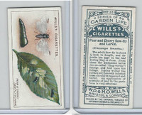 W62-82 Wills, Garden Life, 1914, #33 Pear & Cherry Saw-Fly & Larvae