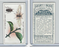 W62-82 Wills, Garden Life, 1914, #34 Cherry Aphis, Black Fly