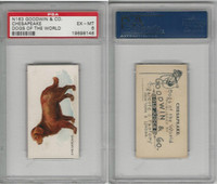 N163 Goodwin, Dogs of World, 1890, Chesapeake, PSA 6 EXMT