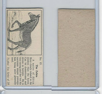 T0-0 Typhoo Tea, Wild Animals, 1955, #13 Zebra
