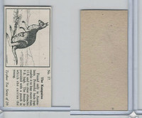 T0-0 Typhoo Tea, Wild Animals, 1955, #17 Kangaroo