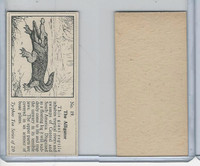 T0-0 Typhoo Tea, Wild Animals, 1955, #19 Alligator