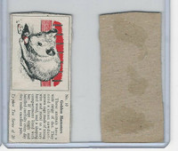 T0-0 Typhoo Tea, Pets, 1955, #10 Golden Hamsters