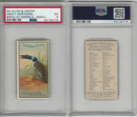 N4 Allen & Ginter, Birds of America, 1888, Great Northern Diver Loon, PSA 5 EX