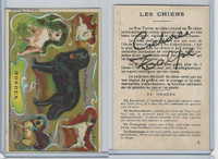 Victorian Card, 1890's, Animals, Breeds of Dogs, Honden, Dutch (F)
