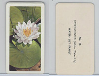 FC34-4 Brook Bond, Wild Flowers NA, 1961, Printer Proof, #16 Water Lily
