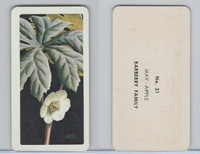 FC34-4 Brook Bond, Wild Flowers NA, 1961, Printer Proof, #21 May Apple