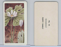 FC34-4 Brook Bond, Wild Flowers NA, 1961, Printer Proof, #22 Boodroot