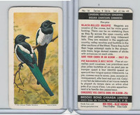 FC34-10 Brook Bond, Canadian/Am. Songbirds, 1966, #16 Black-Bill Magpie