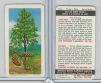 FC34-12 Brook Bond, Trees North America, 1968, #3 Jack Pine