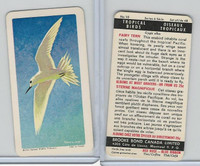 FC34-8 Brooke Bond, Tropical Birds, 1964, #10 Fairy Tern (Black Back)