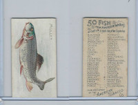 T407 American Tobacco, Fish From American Waters, 1910, Mullet
