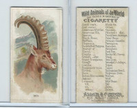 N25 Allen & Ginter, Wild Animals, 1888, Ibex (B)