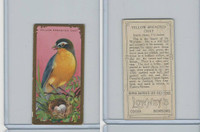 E226 Lowneys Chocolates, Bird Series, 1920's, Yellow Breasted Chat