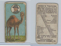 E27 American Caramel, Teddy's Trophies, 1920's, Camel
