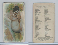 E28 Philadelphia Caramel, Zoo Cards, 1909, Badger