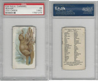 E28 Philadelphia Caramel, Zoo Cards, 1909, Beaver, PSA 1 MC