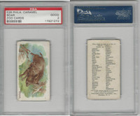 E28 Philadelphia Caramel, Zoo Cards, 1909, Boar, PSA 2 Good