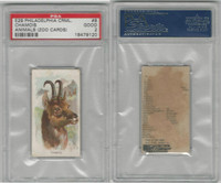 E29 Philadelphia Caramel, Zoo Cards, 1907, Chamois, PSA 2 Good