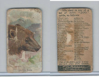 E29 Philadelphia Caramel, Zoo Cards, 1907, Grizzly Bear