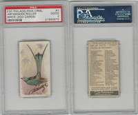 E30 Philadelphia, Zoo Cards, Song Birds, 1907, Abyssinian Roller, PSA 2 Good