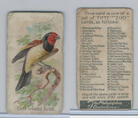 E30 Philadelphia, Zoo Cards, Song Birds, 1907, Black Breasted Barbet
