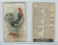 E31 Philadelphia, Zoo Cards, Game Fowl, 1907, Andalusian Cock