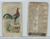 E31 Philadelphia, Zoo Cards, Game Fowl, 1907, Black Breasted Red Game Cock