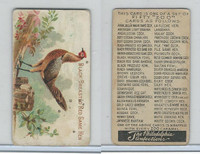 E31 Philadelphia, Zoo Cards, Game Fowl, 1907, Black Breasted Red Game Hen