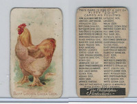 E31 Philadelphia, Zoo Cards, Game Fowl, 1907, Buff Cochin China Cock